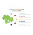 brocoli infographic template concept with five vector image vector image