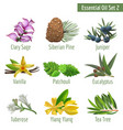 essential oil set in a realstic style vector image