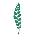 green branch leaves vector image