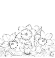 Narcissus flowers isolated on white background vector image vector image