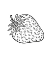 sketch of the strawberry vector image vector image