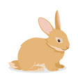 cute rabbit icon isolated small fluffy pet with vector image