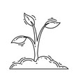 gardening plant hand drawn icon outline black vector image vector image