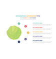 green cabbage infographic template concept with vector image vector image