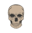hand drawn skull vector image