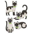 set cute siamese cat vector image vector image