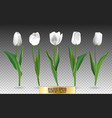 set red realistic tulip flowers vector image