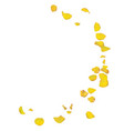 yellow roses petals are falling down vector image