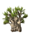 Baobab tree isolated vector | Price: 1 Credit (USD $1)