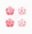 beautiful pink flowers cherry blossom isolated vector image vector image