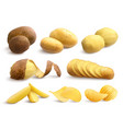 raw and fried potato realistic set vector image