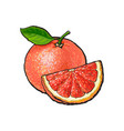 whole and quarter piece of unpeeled ripe pink vector image vector image