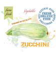 Zucchini watercolor banner vector image