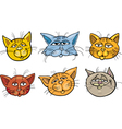 Cartoon funny cats heads set vector image vector image