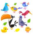cute cartoon birds collection vector image vector image