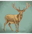 engraving reindeer retro vector image