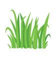 grass cartoon texture field shape vector image