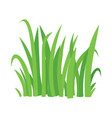 grass cartoon texture grass field shape vector image