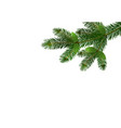 green realistic branch of fir or pine close-up vector image vector image
