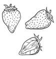 set sketch strawberries vector image vector image