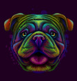 bulldog abstract neon portrait vector image vector image