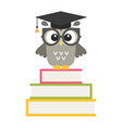 cute owl on the books isolated on white vector image vector image