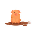 funny pink pig in dirty puddle vector image