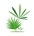 green exotic leaves banana leaf vector image