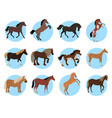 horses colourful banner in blue circles on white vector image vector image
