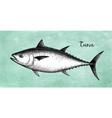ink sketch of tuna vector image vector image