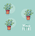 set of cute houseplants cartoon vector image vector image