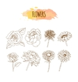 Hand Drawn Flower Set Floral vector image