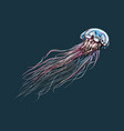 hand drawn sketch of jellyfish in color on a dark vector image