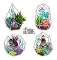 succulents and crystals vector image vector image