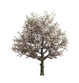 Apple tree isolated vector image