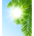 branches palm trees vector image vector image