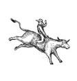 bull riding rodeo cowboy drawing vector image vector image