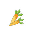 color carrot on a white vector image vector image
