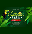 summer sale design with flower toucan bird and vector image vector image