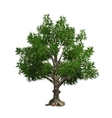 Tree isolated vector image vector image