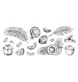 coconut sketch hand drawn palm leaves and coco vector image vector image