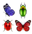 Realistic insects butterfly bugs ladybird ant