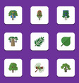 flat icon nature set of hickory baobab wood and vector image vector image