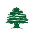 abstract cedar tree icon vector image vector image