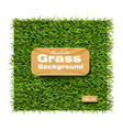grass background realistic layout template vector image vector image