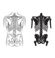 human bone anatomy vector image