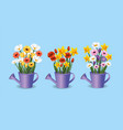 set exotic roses and flowers plants inside vector image