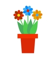 Spring colorful garden flowers in pot vector image vector image