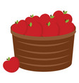 apples in bucket on white background vector image vector image
