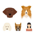 muzzle of different breeds of dogscollie breed vector image